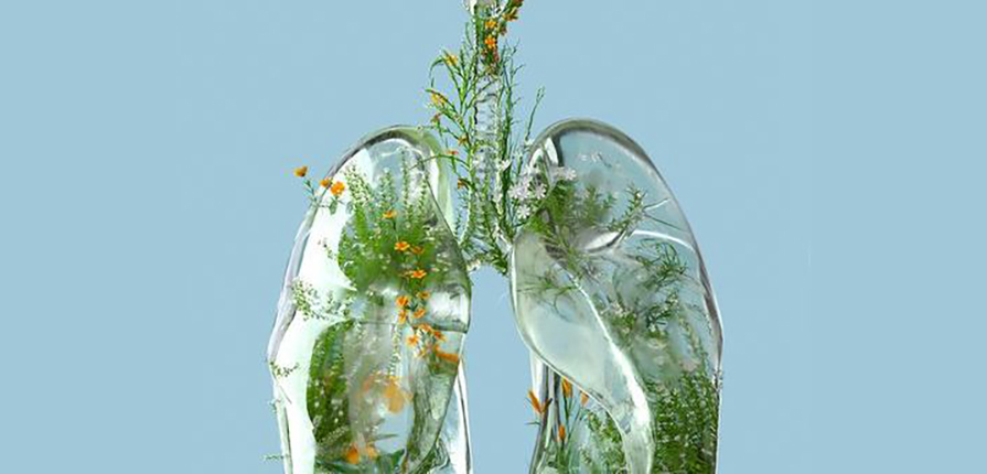 A clear Lung with plant life showing Indoor Air Quality